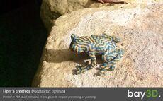 bay3d_treefrog2.jpg