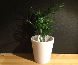 Rectilinear flowerpot