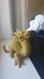 3D Print NZ3D打印图片