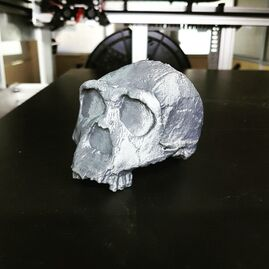 KNMER3733-Homo Erectus Skull