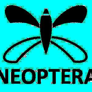 Neoptera